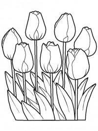 Kleurplaten Van Mooie Bloemen.Kleurplaten Bloemen Topkleurplaat Nl