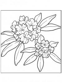 Olifant Kleurplaat Printen Kleurplaten Bloemen Topkleurplaat Nl