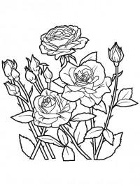 Kleurplaat Konijn Verjaardag Kleurplaten Bloemen Topkleurplaat Nl