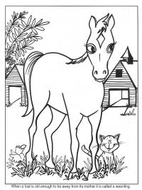 Kleurplaten Paarden Printen.30 Kleurplaten Paarden Tip Gratis Te Printen