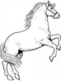 Kleurplaten Paarden In De Wei.Paardenhoofd Kleurplaat
