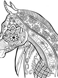 Kleurplaten Paarden Gratis.Paarden Kleurplaat