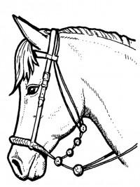30 Gratis Te Printen Kleurplaten Paarden Topkleurplaat Nl