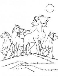 Kleurplaten Van Paarden En Pony S En Veulens Archidev