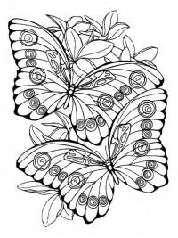 Kleurplaten Bloemen Vlinders Hartjes.Kleurplaten Vlinders Topkleurplaat Nl