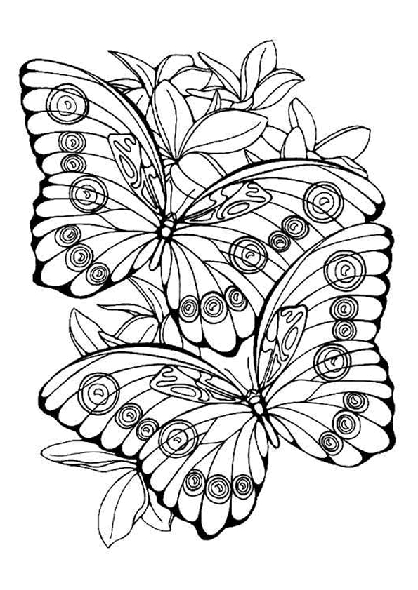 Aap Andala Kleurplaat Kleurplaten Vlinders Topkleurplaat Nl