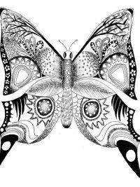 Kleurplaten Vlinders Zoeken.Kleurplaten Vlinders Topkleurplaat Nl