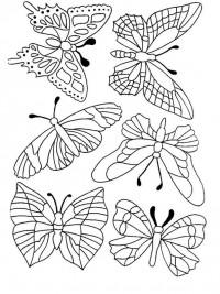 Volwassen Kleurplaten Vlinders.Kleurplaten Vlinders Topkleurplaat Nl