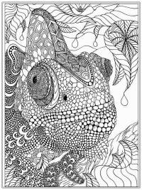 Kleurplaten Voor Volwassenen Schildpad.60 Kleurplaten Voor Volwassenen Gratis Te Printen