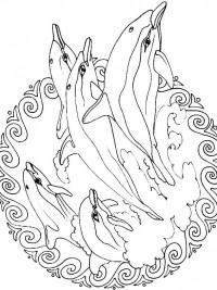 20 Gratis Te Printen Dolfijn Kleurplaten Topkleurplaat Nl