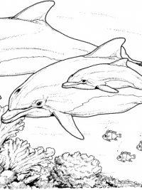 Kleurplaten Dolfijnen En Paarden 20 Gratis Te Printen Dolfijn Kleurplaten Topkleurplaat Nl