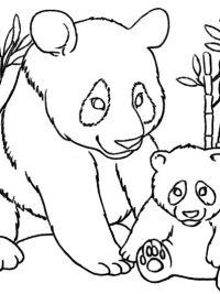 kleurplaat volwassenen panda kleurplaten dieren