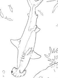 Zeedieren Haai Vis Kleurplaat Haaien Klassiekeauto