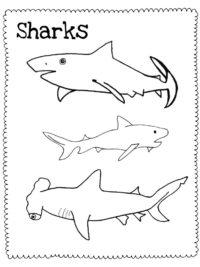 Kleurplaten Haaien Topkleurplaat Nl