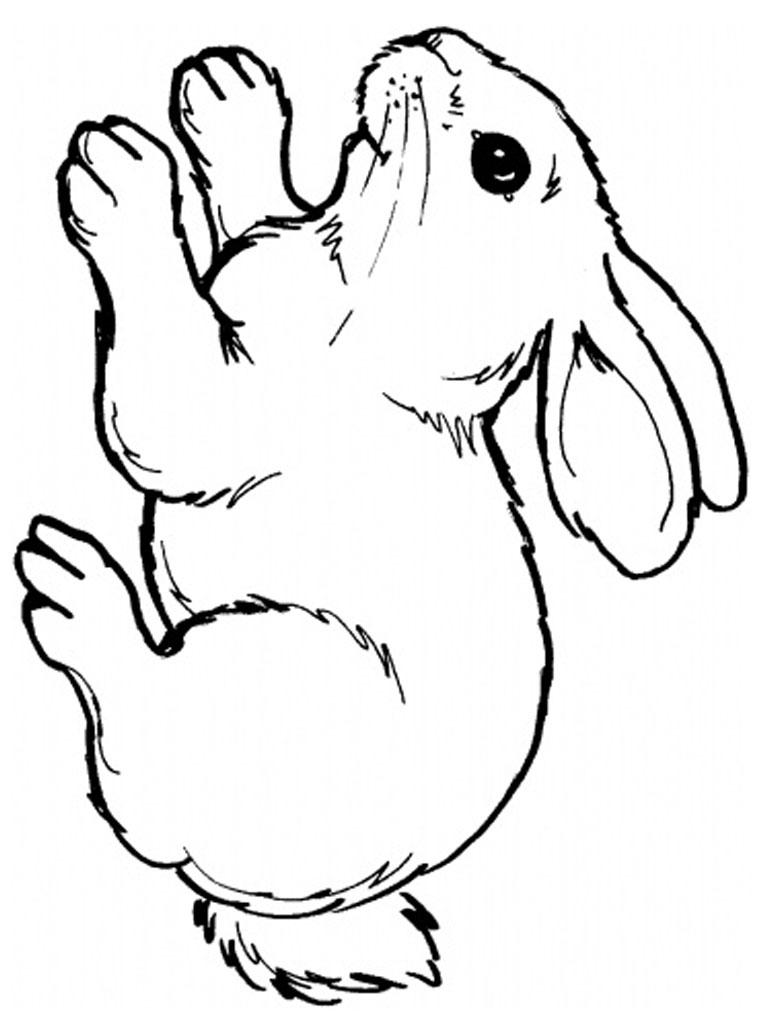 kleurplaat konijn18 topkleurplaat nl