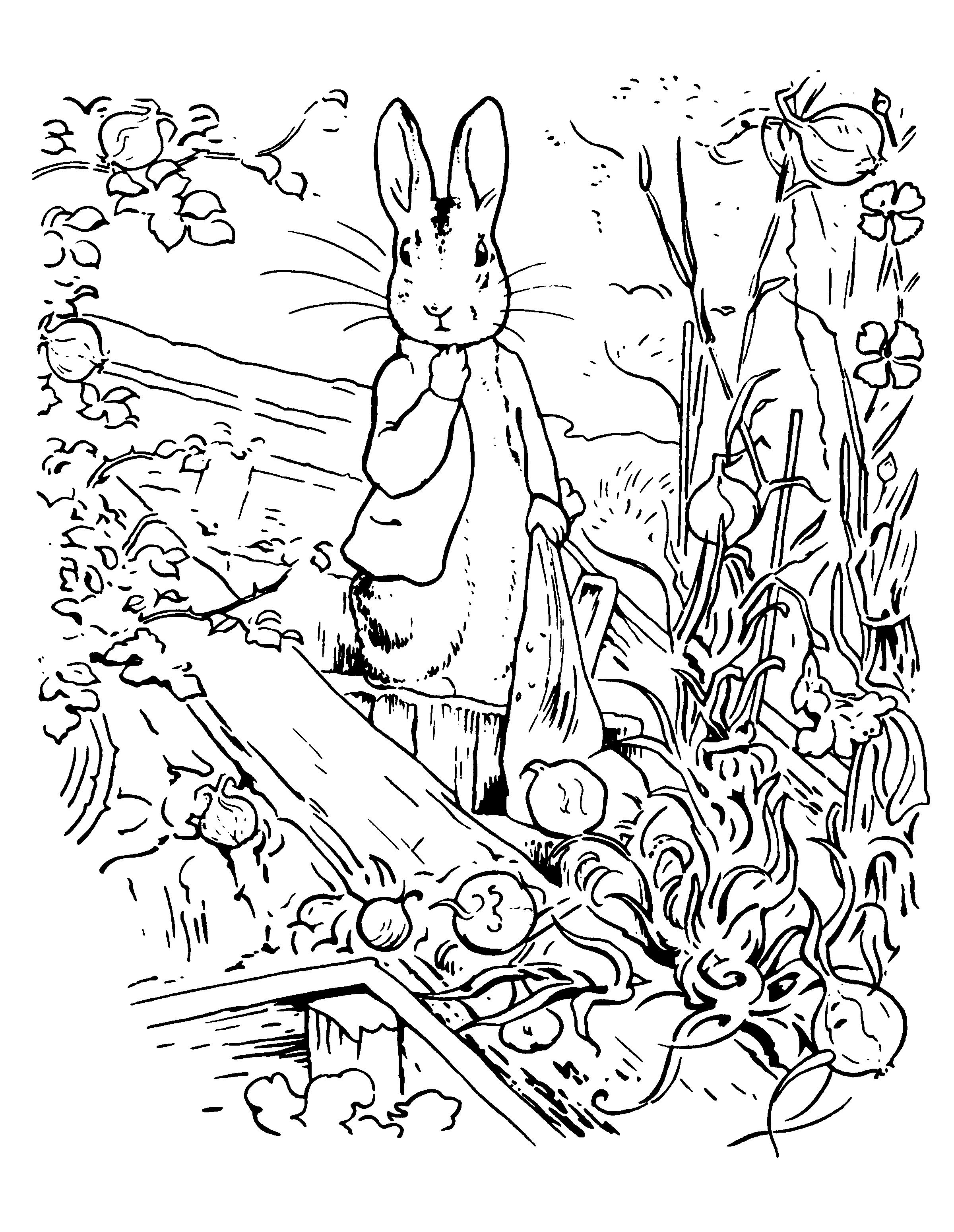 pieter konijn kleurplaat01 topkleurplaat nl