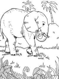 kleurplaten olifant topkleurplaat nl