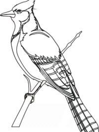 Mandala Kleurplaten Vogels.Kleurplaten Vogel Topkleurplaat Nl