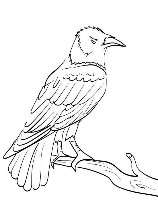 kleurplaat vogel 13 topkleurplaat nl