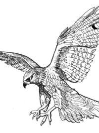 Kleurplaten Dieren Vogels.Kleurplaten Vogel Topkleurplaat Nl