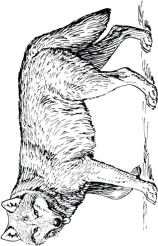 kleurplaat wolf 06 topkleurplaat nl