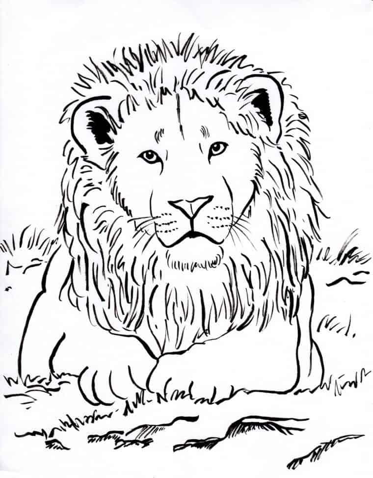 kleurplaat-leeuw-01