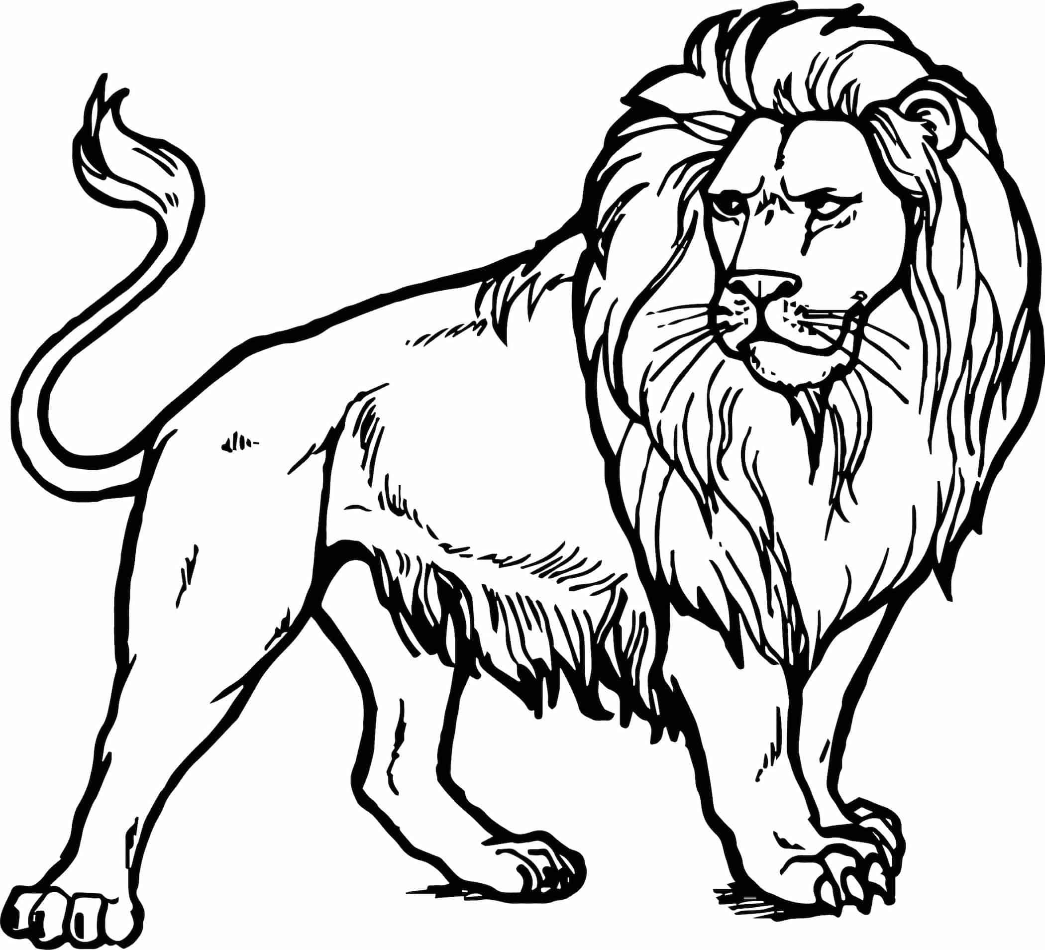 kleurplaat-leeuw-07