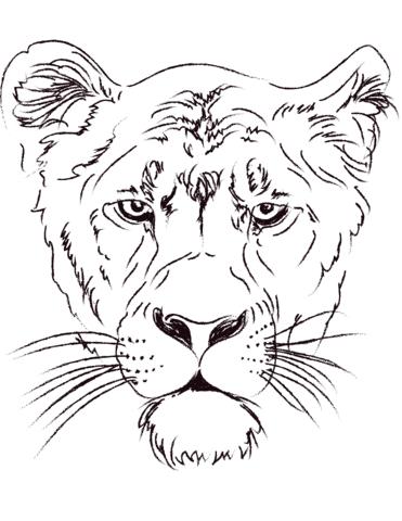 kleurplaat-leeuwin