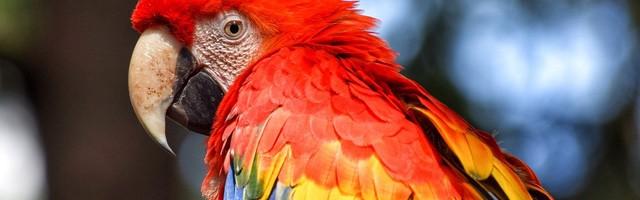 kleurplaten papegaai