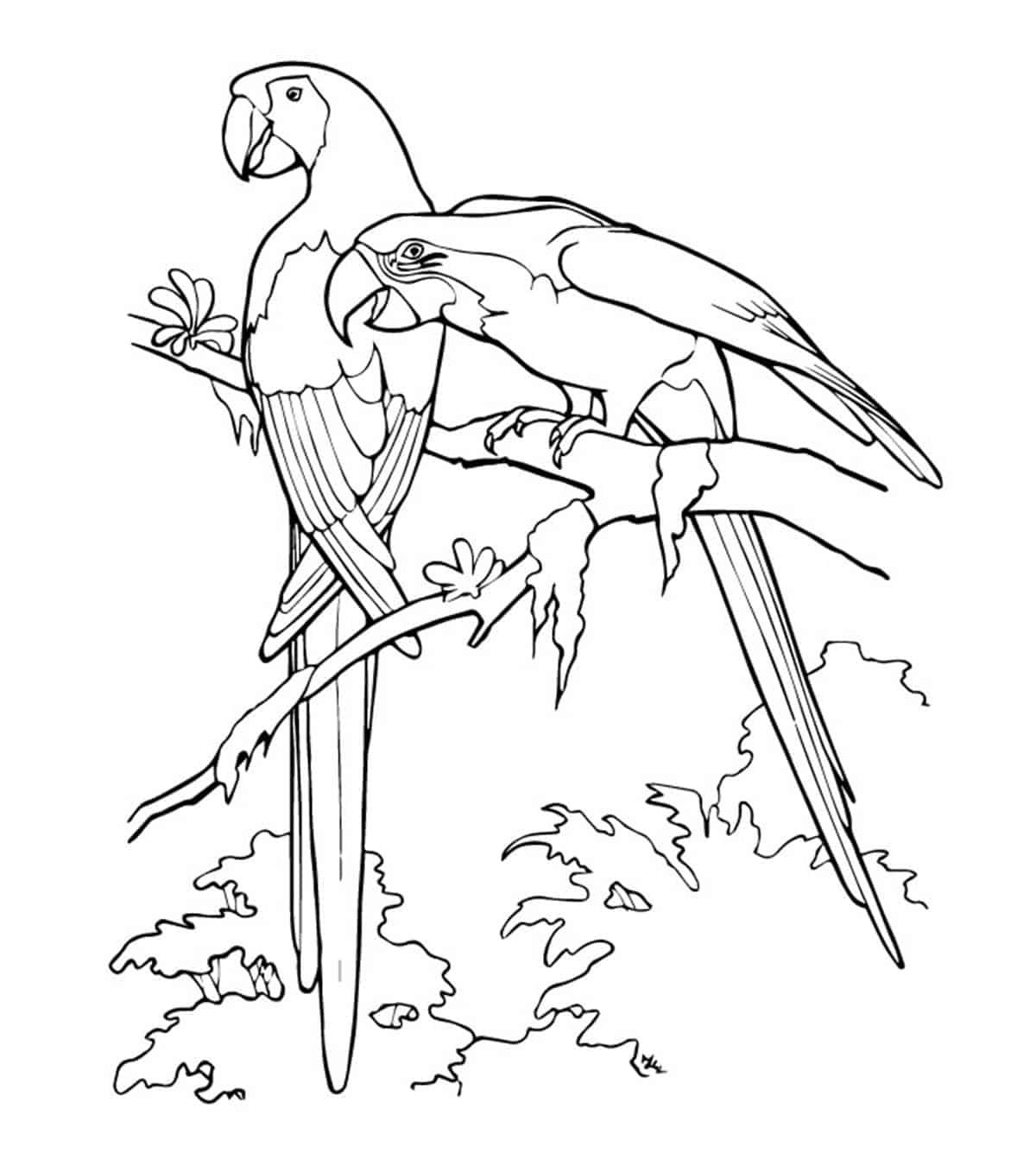 mooie papegaaien topkleurplaat nl