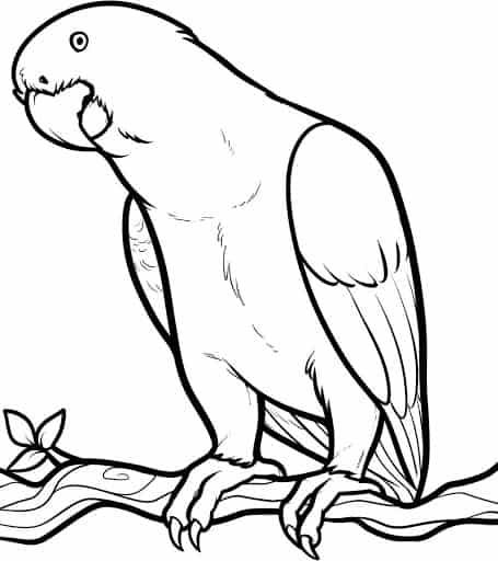 nieuwsgierige papegaai topkleurplaat nl