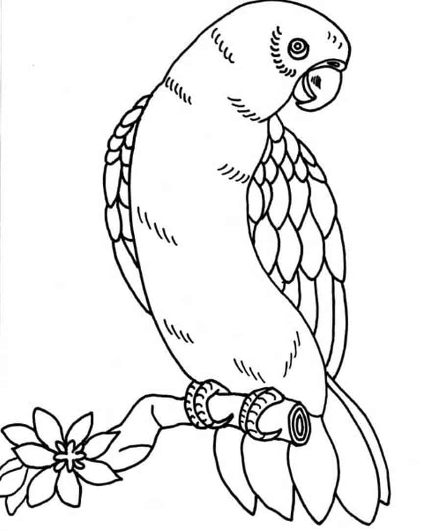 papegaai kleurplaat 01 topkleurplaat nl
