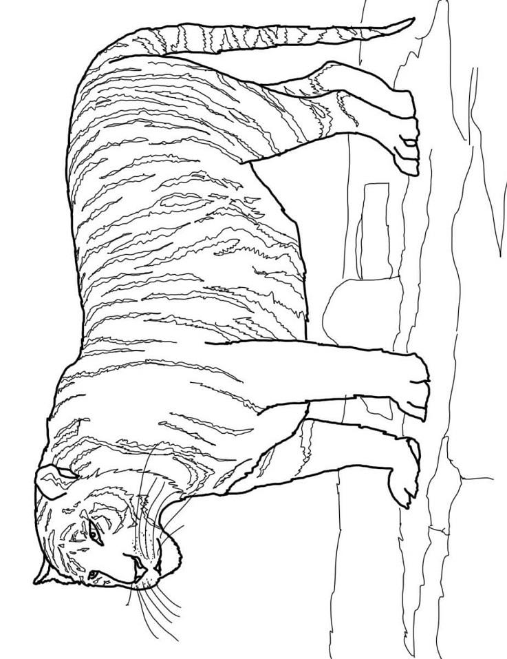 realistische tijger