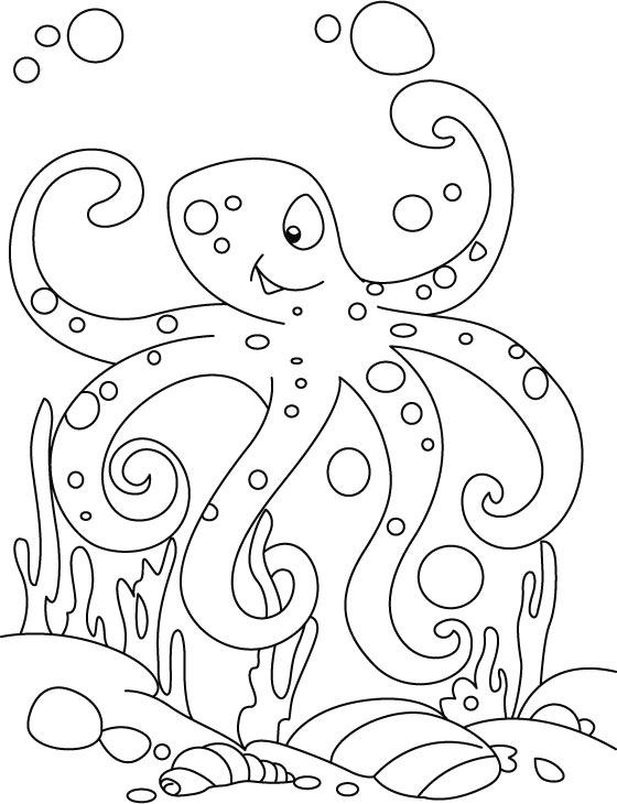 octopus op de zeebodem